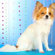 Funny little dog — Stock Photo #6794448