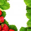 Many strawberries and leaves makes frame — Stock Photo #6795932
