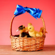 Little yellow fluffy ducklings in basket on red background — Stock Photo