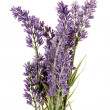 Stock Photo: Beautiful lavender flowers