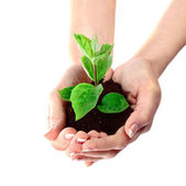 Young plant in hand over white — Stock Photo