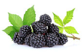 Beautiful blackberries isolated on white — Stock Photo