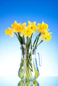 Yellow daffodils in a vase on blue background — Stock Photo