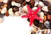 Red seastar on pebble background — Stock Photo