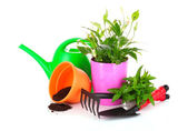 Gardening and plant isolated on a white background — Stock Photo