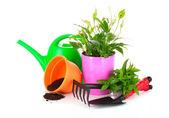 Jardinería y plantas aisladas sobre un fondo blanco — Foto de Stock