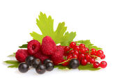 Fresh delicious summer berries — Stock Photo