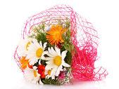 Chamomile Flowers isolated on white — Stock Photo