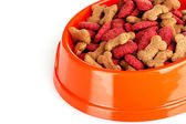 Hundmat i skål — Stockfoto