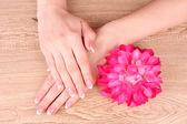 Vrouw handen met frans manicure houden rode bloem — Stockfoto