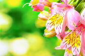 Pink flowers on green background — Stock Photo