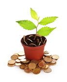 Young plant in pot with coins isolated on white. Ukrainian coins — Stock Photo