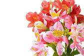 Beautiful bouquet — Stockfoto