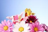 Mavi renkli çiçekler — Stok fotoğraf
