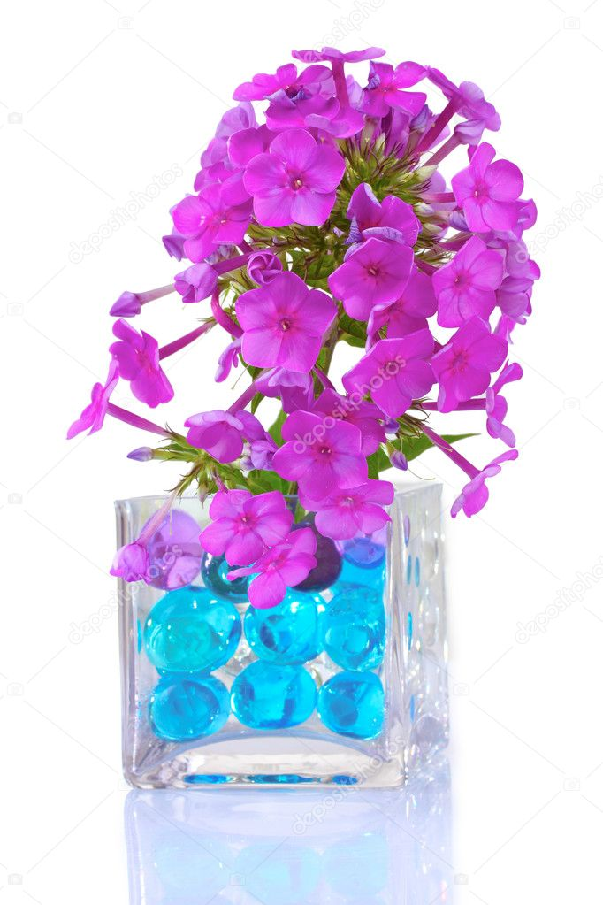 Beautiful flowers in vase with hydrogel isolated on white  Stock Photo #6791090