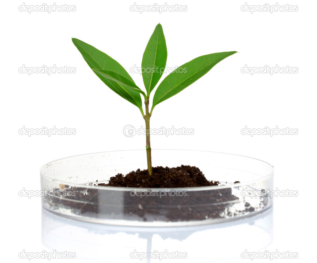 Plant in laboratory stock photo belchonock 6794748 for Soil and plant lab