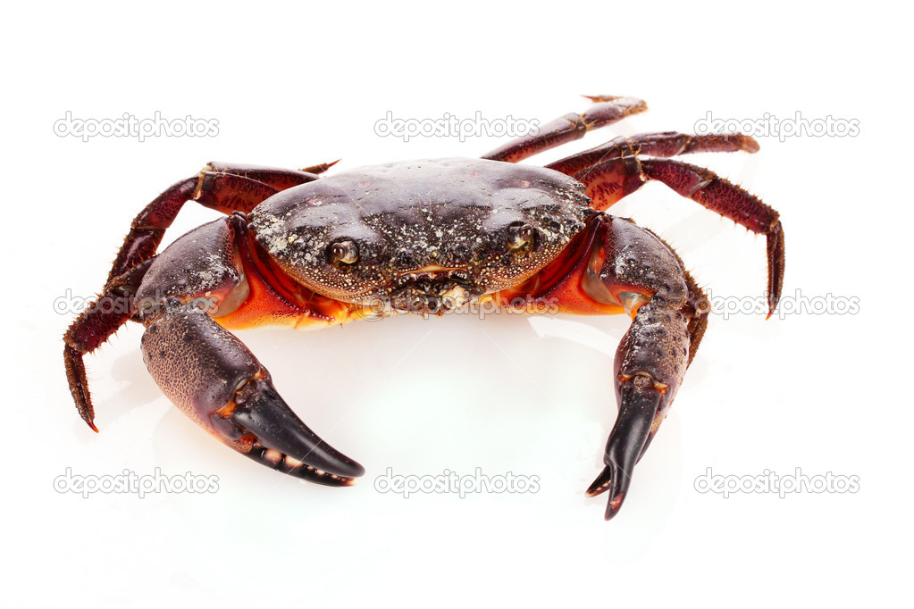 Crab isolated on white — Stock Photo #6795085