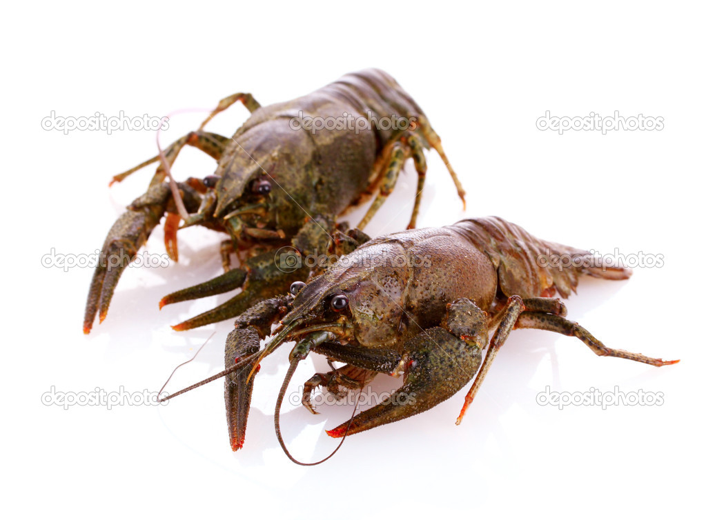 Crayfish isolated on white — Stock Photo #6795134