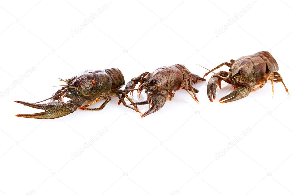 Crayfish isolated on white — Stock Photo #6795143