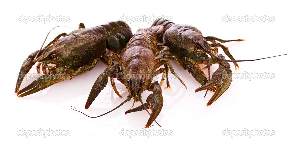 Crayfish isolated on white — Photo #6795153