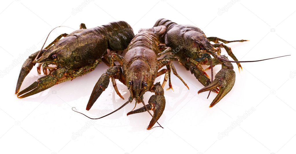 Crayfish isolated on white — Stockfoto #6795153