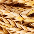 Wheat closeup — Stock Photo #6800381