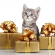 Royalty-Free Stock Photo: Funny kitten and golden gifts  isolated on white