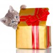 Funny kitten in golden gift box isolated on white — Stock Photo #6800959