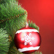 Beautiful Christmas red ball on fir tree — Stock Photo #6801840