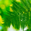 One leaf of fern on green background — Stock Photo #6802203