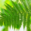 One leaf of fern on green background - Stock Photo