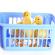 Two small yellow duck  — Stock Photo