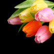 Many colorful tulips on black background — Stock Photo