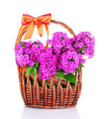 Bouquet of phlox — Stock Photo