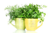 Fresh parsley and dill in cups — Stock Photo