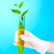 Test tube with plants and hand — Stock Photo