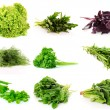 Collage of culinary greens. isolated on white -  