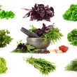 Collage of culinary greens - Stock Photo