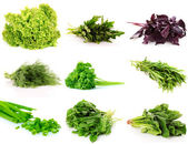Collage of culinary greens. isolated on white — Stock Photo