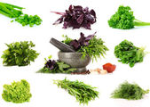 Collage of culinary greens — Stock Photo