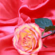 Stock Photo: Beautiful red rose on pink satin