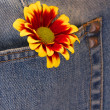 Orange flower on the jeans — Stock Photo