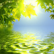 Stock Photo: Green leaves reflecting in water