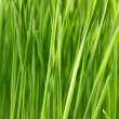 Close up of the green grass — Stock Photo