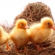 Yellow fluffy ducklings on the hay — Stock Photo #7287443