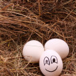 Eggs on hay - Stock Photo