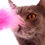 kočka portrét izolovaných na bílém pozadí — Stock fotografie