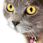 Grey cat white background — Stock Photo