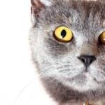 Cat portrait isolated on white background — Stock Photo