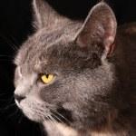Cat portrait isolated on black background — Stock Photo
